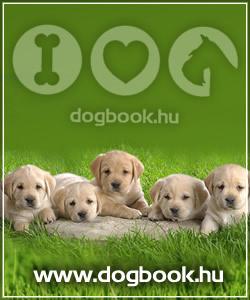 Kutyatulajdonosok lapja